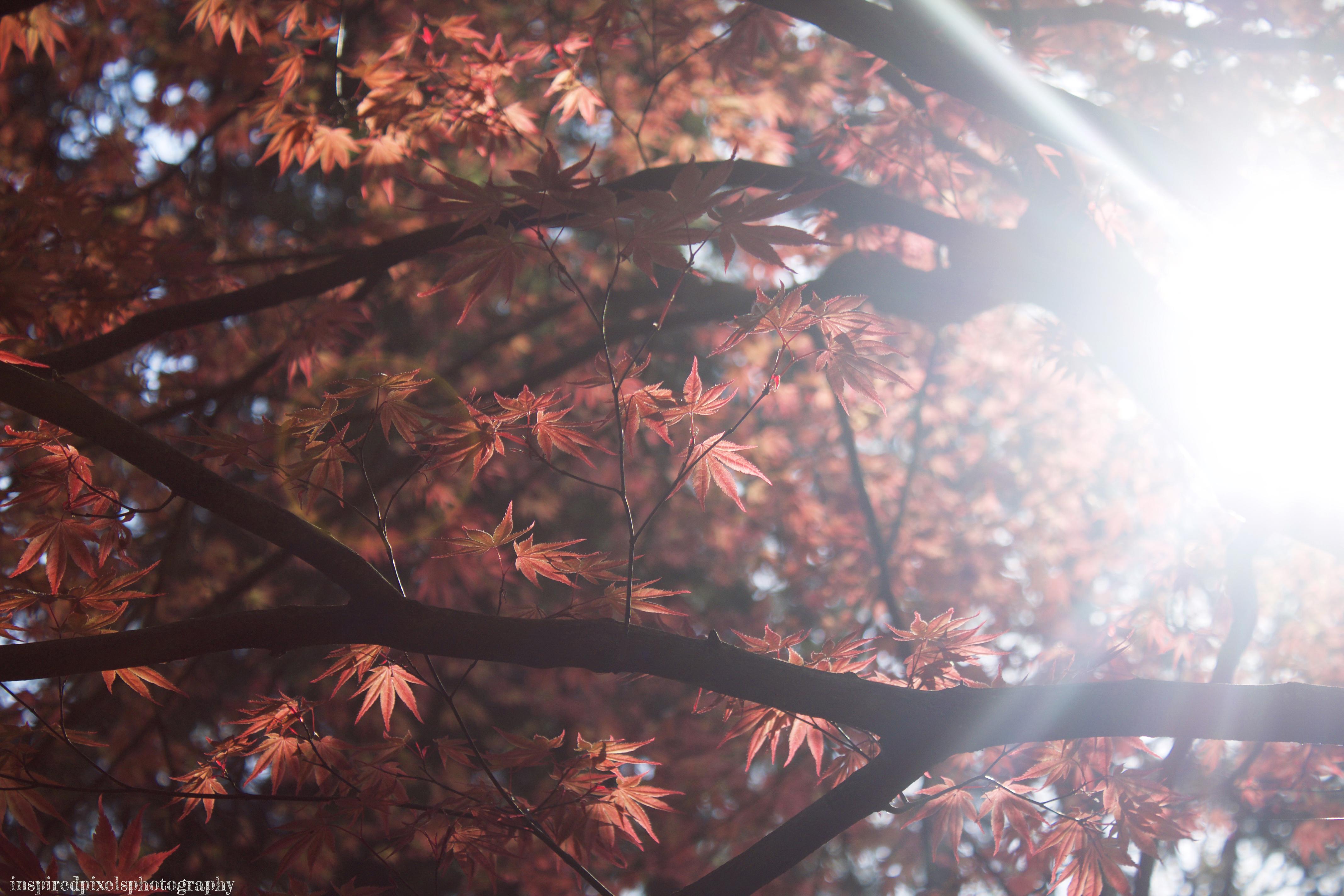 Sunlit Stanley Park