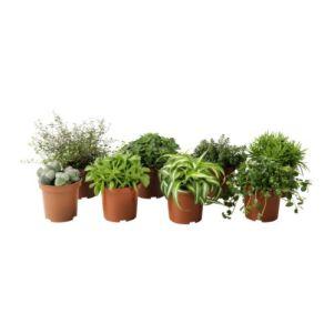 himalayamix-potted-plant__67453_PE181294_S4 (1)